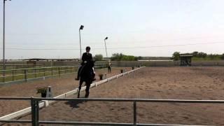 Lucy Sharp from Royal Equus farm riding her super stallion Sonntagskind - 1