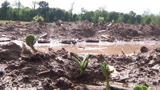 La. Farmers Wait for Dry Weather