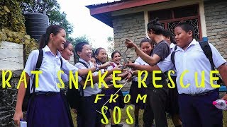Common Rat Snake | Rescue | SOS | Pokhara | Rohit Giri |