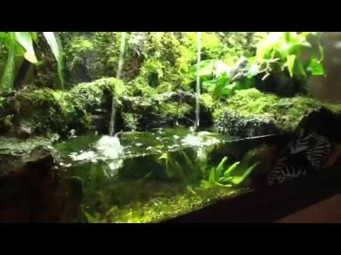 Whites Tree Frog Terrarium Youtube