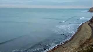 Море сегодня и что требует РЖД при перевозке кошек