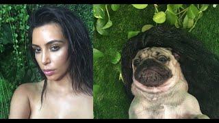 Doug The Pug's Kim Kardashian Photoshoot (behind The Scenes)