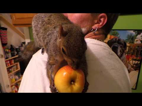 Wally the Squirrel's Really BIG, tiny Apple!