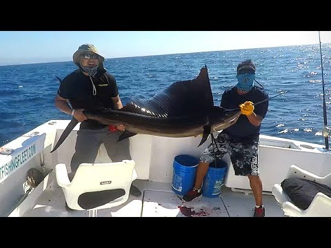 CABO SAN LUCAS FISHING 2017 (1 SAIL FISH, 2 MARLIN, 2 DORADO)