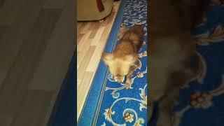 Улетное видео про собаку