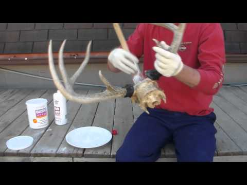 How to european mount a deer skull.