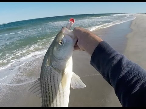 Striped Bass Gone Crazy... IN THE WASH!!