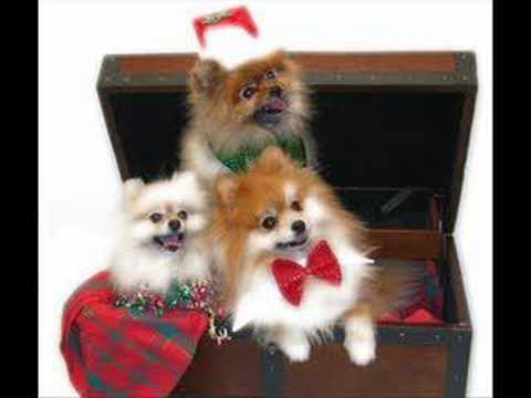 Dogs Barking Christmas Song - YouTube