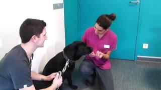 Comment faire avaler un comprimé à votre chien?