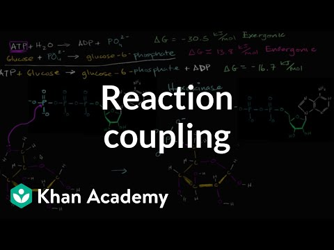 Reaction coupling to create glucose 6 phosphate | Biology | Khan Academy