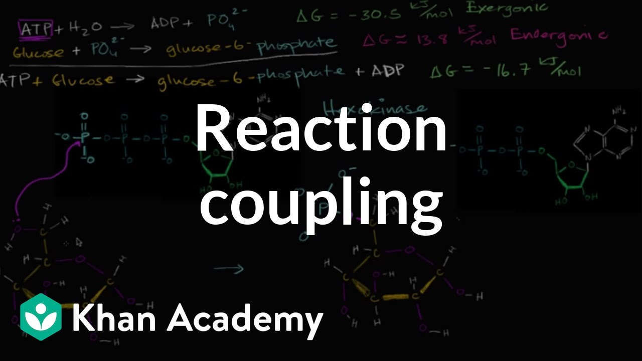 Reaction coupling to create glucose-6-phosphate (video