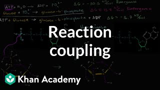 Reaction Coupling To Create Glucose 6 Phosphate