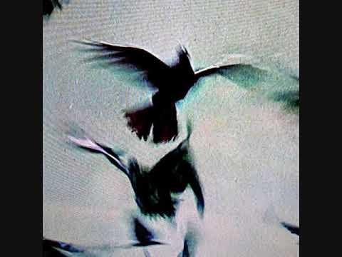 Youtube: Lucio Bukowski X Casus Belli X Oster Lapwass – JOUVENCE