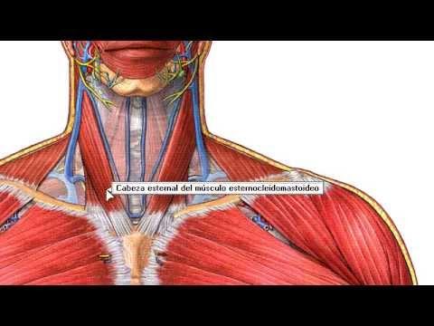 Instalacion del programa de _Seminario de Morfología y Anatomia ...