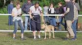 Профессиональный питомник занимающийся разведением собак породы американский пит-бультерьер. Высокопородные, перспективные щенки.