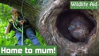 Can we get this baby OWL home to mum?!