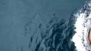 Toisa Valiant - Dolphins