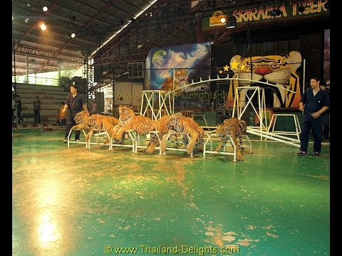 sri-racha-tiger-zoo,-sri-racha-district,-chon-buri-province,-thailand.-(-10-)