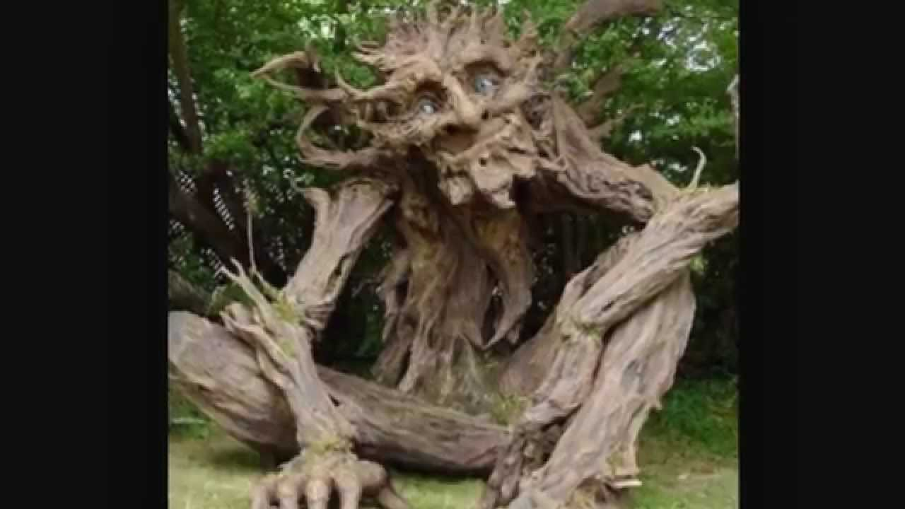 The most unusual trees of the world: description, interesting facts 99