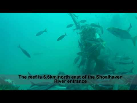 Crazy fish action at the Shoalhaven offshore artificial reef