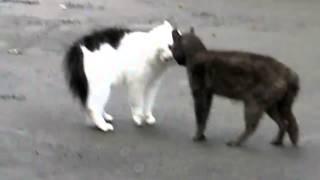 Коты поругались, просто жесть!