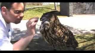 Bit by the biggest Owl on earth