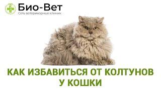Как Избавиться От Колтунов У Кошки & Что Делать, Если У Кошки Появились Колтуны.Ветклиника Био Вет