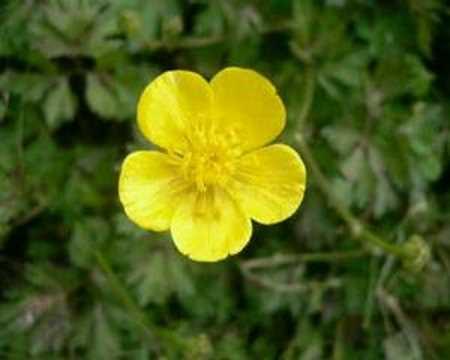 Las flores de jard n mediterraneo youtube Plantas jardin mediterraneo