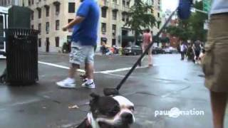 Pet On The Street: Does Your Dog Love New York?