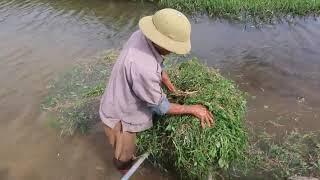 Ra đồng cắt cỏ được một xe rùa mang về