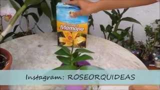 Adubação Orgânica - Torta de Mamona