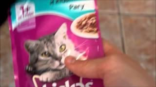 Все что нужно для появления котенка в доме:)