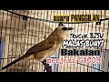 Suara Panggilan Burung Trucukan Ampuh Memancing Trucuk Bakalan Atau Trucuk Bisu Malas Bunyi  Mp3 - Mp4 Download