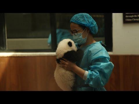 Cuccioli di panda e momenti imbarazzanti a CHENGDU! - VLOG CINA Settembre 2015
