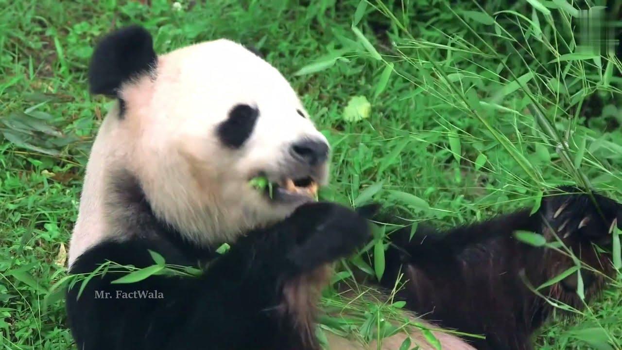 जानवरों के ऐसे कारनामे देखने के लिए नसीब लगता है | Most Amazing & Rare Animal Moment | Part 8