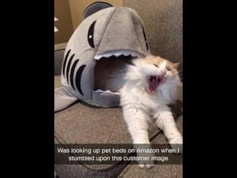 Funny CATS VIDEOS  Try Not To Laugh Watching Funny Pranks 2018 Compilation