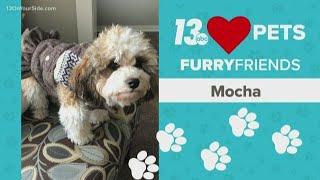 13 Loves Pets: Sweet little Mocha