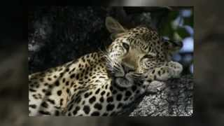 The Great Wilderness Journey Botswana | African Travels