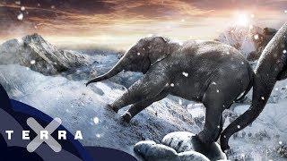 Wie kamen Hannibals Elefanten über die Alpen?  | Antike