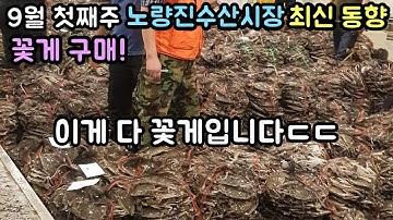 초가을 노량진수산시장 경매장 동향! 제철 가을 활꽃게 구매!! 고르는법까지!
