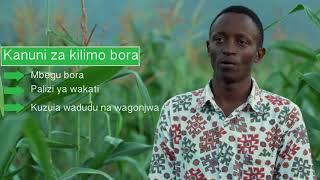 Kutana na vijana wasomi ambao wamechukua fursa ya kilimo cha mahindi lishe