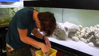 acclimatation de deux jolis poissons dans notre aquarium marin