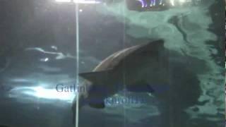Gatlinburg, Tennessee !! Ripley's Aquarium of the Smokies. (jcrocknroll13)
