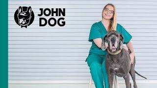 Rozszerzenie żołądka u psa – ZDROWIE PSA – John Dog