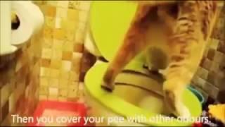 Кот решил сходить в туалет