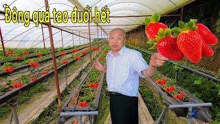 Ông chủ vườn Dâu Tây hài hước và cá tính nhất Đà Lạt 2019
