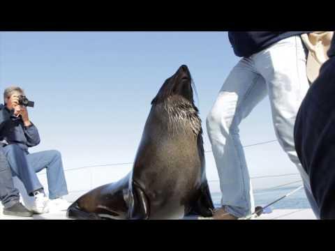 Namibian Charters - Katamaran Dolphin Tours - Walvis Bay - Namibia