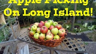 Apple Picking On Long Island!