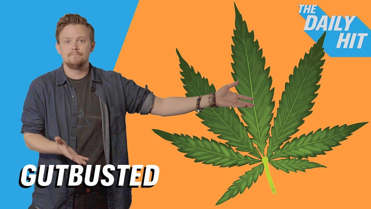 Weed Facts & Marijuana Myths: 420, Amsterdam, Anxiety & More