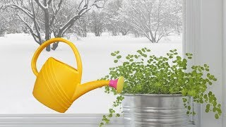 как поливать комнатные растения зимой? Зимний полив растений